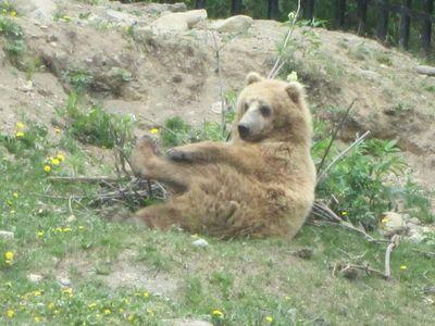 Favorite Bear