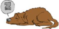 Dogsleepzzz